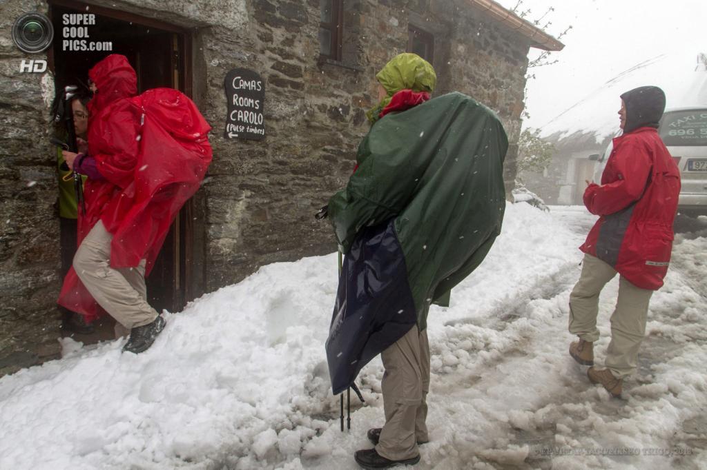 Испания. Пьедрафита-дель-Себреро, Галисия. 18 мая. Майские снегопады. (EPA/ИТАР-ТАСС/ELISEO TRIGO)