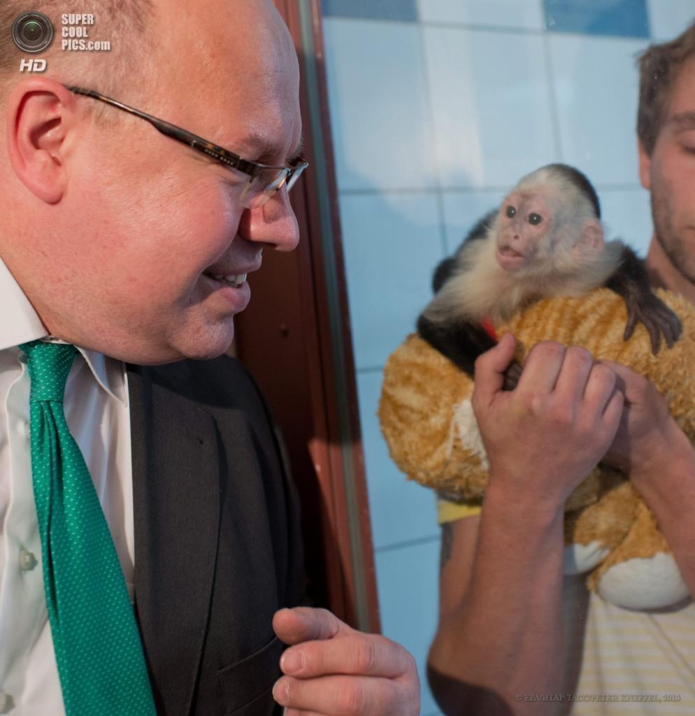 Германия. Мюнхен. 21 мая. Министр по охране окружающей среды Германии Петер Альтмайер во время посещения обезьяны Джастина Бибера, которая до сих пор находится в питомнике. (EPA/ИТАР-ТАСС/PETER KNEFFEL)