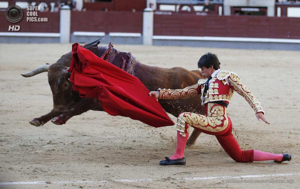 Испания. Мадрид. 5 мая. Матадор Хосе Мария Аренас во время фестиваля корриды на арене «Лас-Вентас». (EPA/ИТАР-ТАСС/JUANJO MARTIN)