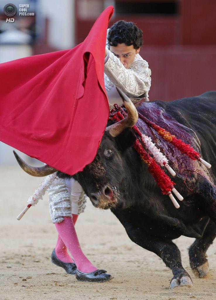 Испания. Мадрид. 5 мая. Матадор Олива Сото во время фестиваля корриды на арене «Лас-Вентас». (EPA/ИТАР-ТАСС/JUANJO MARTIN)