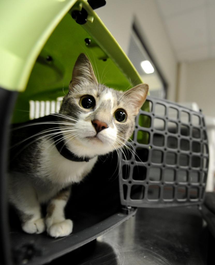 Пункт ветеринарного контроля в аэропорту