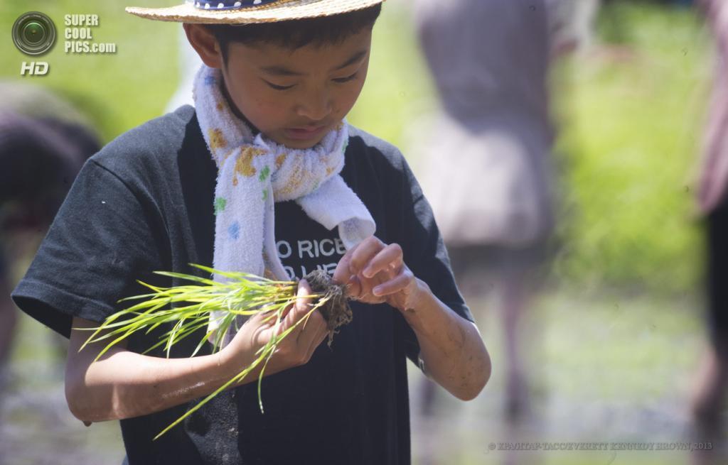 Япония. Исуми, Тиба. 12 мая. Культивация риса. (EPA/ИТАР-ТАСС/EVERETT KENNEDY BROWN)