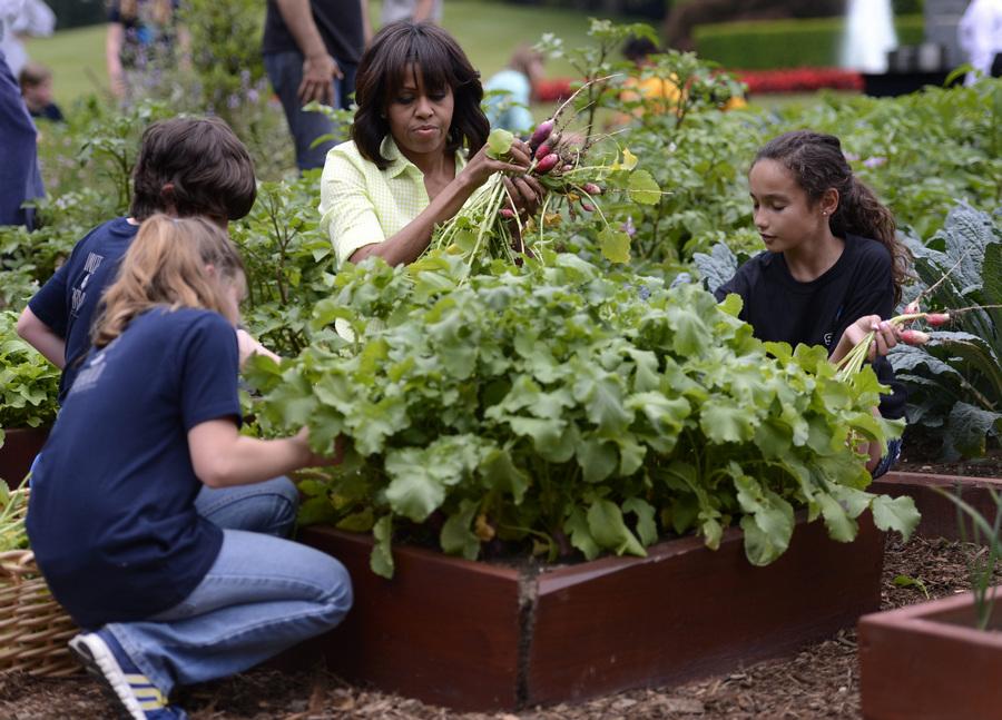 Мишель Обама во время уборки урожая на огороде у Белого дома