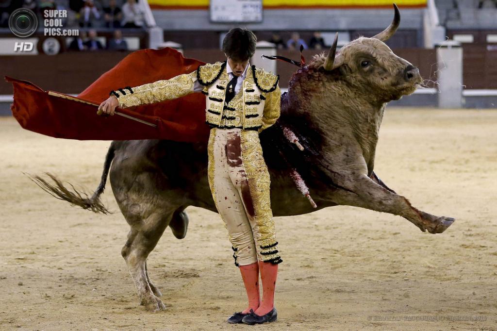 Испания. Мадрид. 5 мая. Матадор Эсау Фернандес во время фестиваля корриды на арене «Лас-Вентас». (EPA/ИТАР-ТАСС/JUANJO MARTIN)