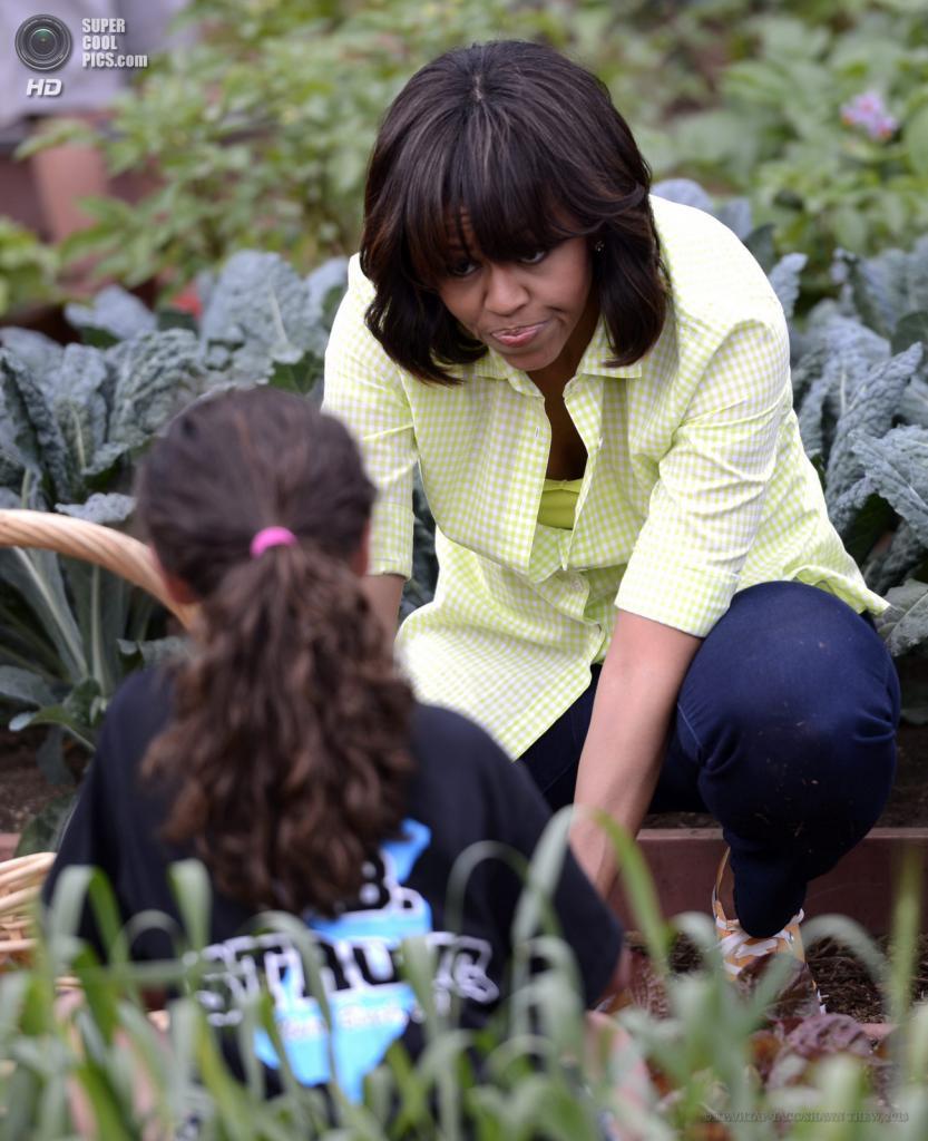 США. Вашингтон. 28 мая. Мишель Обама во время уборки урожая на огороде у Белого дома. (EPA/ИТАР-ТАСС/SHAWN THEW)