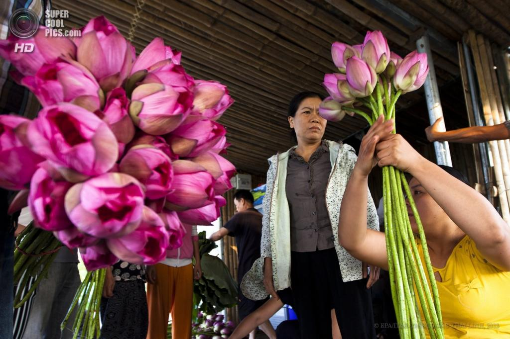 Вьетнам. Ханой. 13 июня. Во время продажи цветов лотоса. (EPA/ITAR-TASS/LUONG THAI LINH)