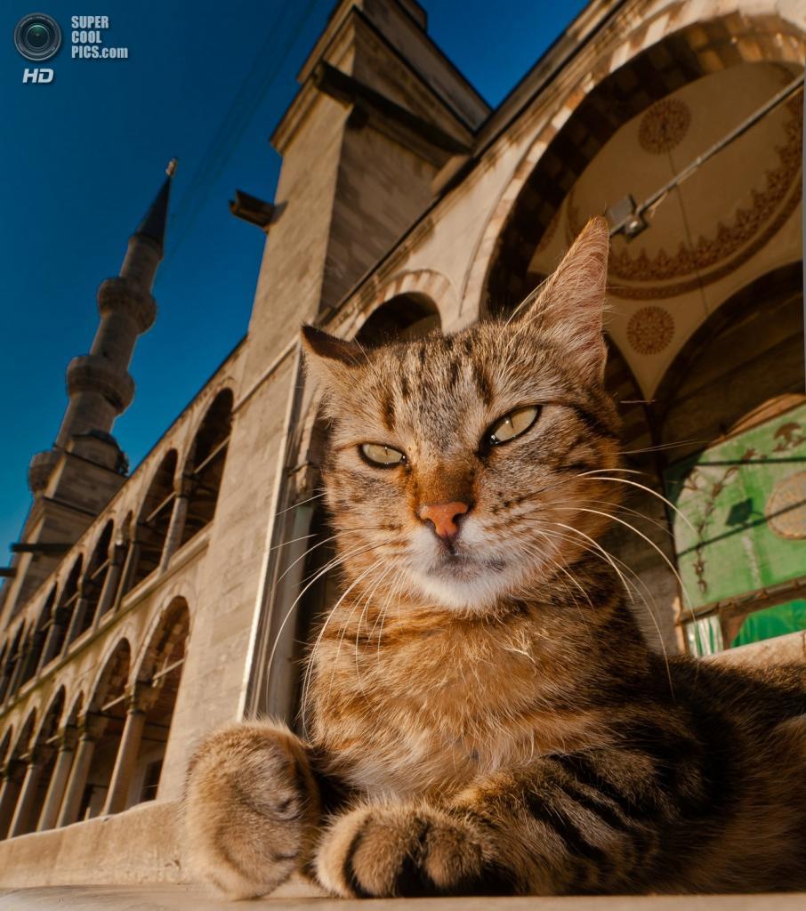 Усатый страж Голубой мечети. (Jussi Mononen)