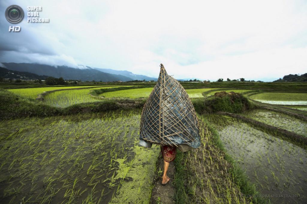 Непал. Катманду. 26 июня. Непальская женщина под зонтом Ghoom. (EPA/ИТАР-ТАСС/NARENDRA SHRESTHA)