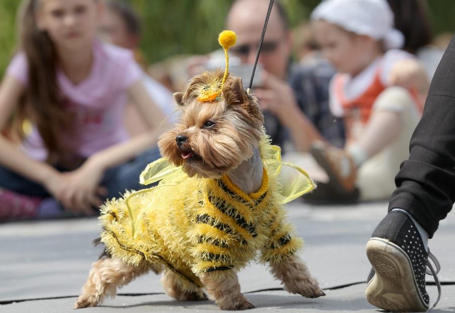Показ мод для собак в Минске