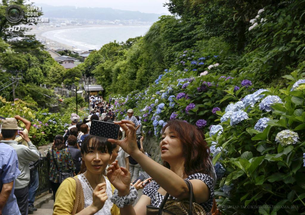 Япония. Камакура, Канагава. 18 июня. Посетители гуляют среди цветущих гортензий на территории буддийского храма Хасэ-дэра. (EPA/ИТАР-ТАСС/KIMIMASA MAYAMA)