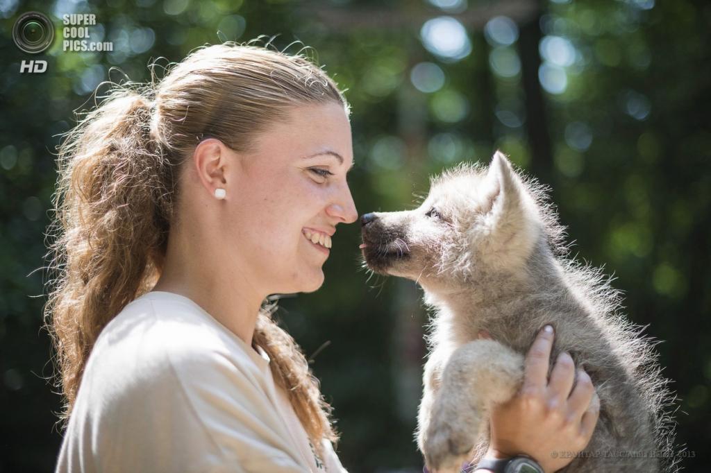 Венгрия. Ньиредьхаза. 20 июня. Детёныш мелвильского островного волка в зоопарке Ньиредьхазы. (EPA/ИТАР-ТАСС/Attila Balazs)
