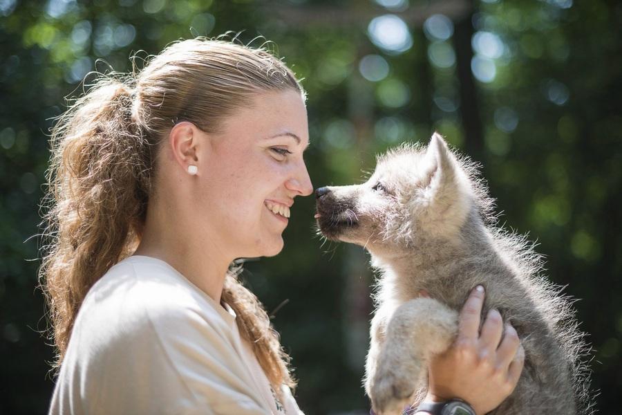 Поход мелвильских волчат к ветеринару (4 фото)