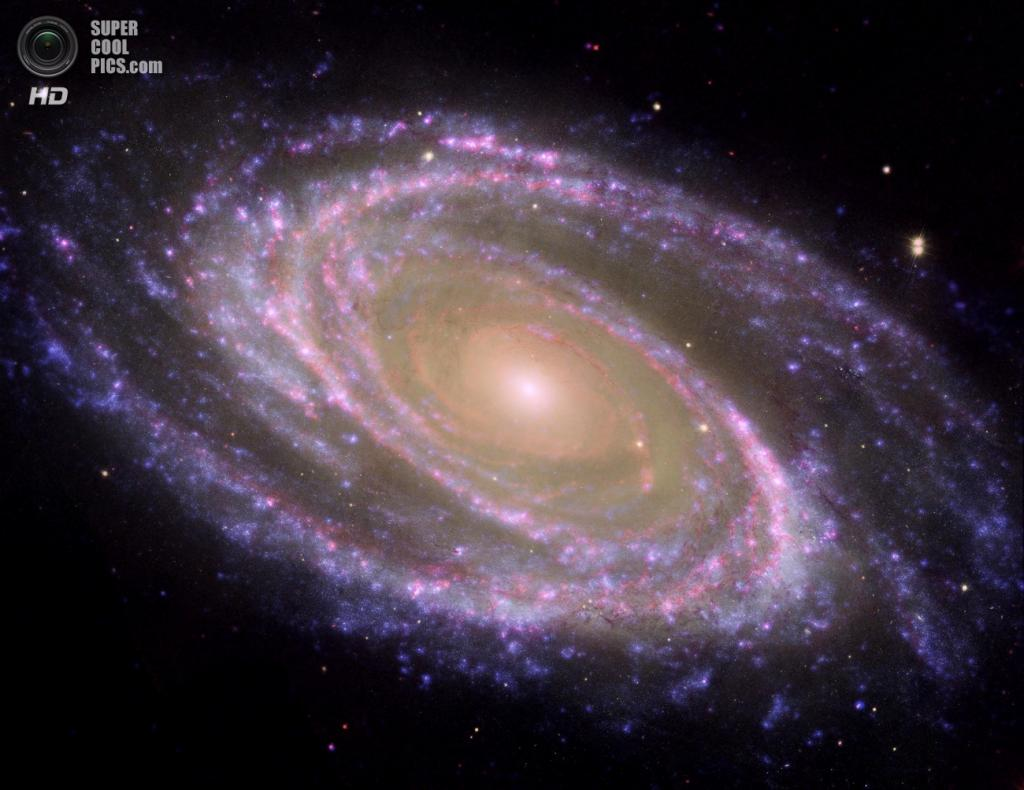 Галактика Боде. (NASA/JPL-Caltech/ESA/Harvard-Smithsonian CfA)