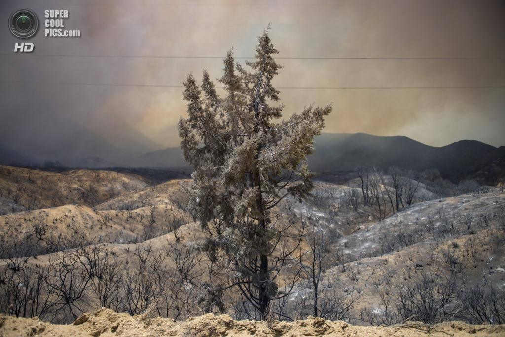 США. Санта-Кларита, Калифорния. 2 июня. Последствия природных пожаров. (EPA/ITAR-TASS/STUART PALLEY)