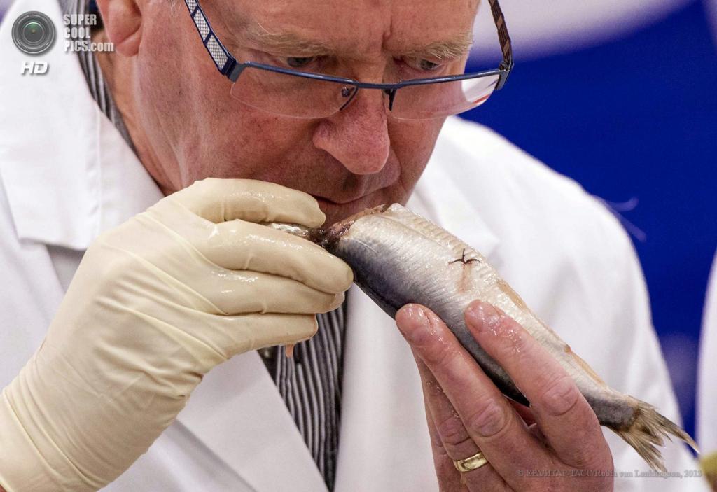 Нидерланды. Схевенинген. 19 июня. Эксперт проверяет качество сельди. (EPA/ИТАР-ТАСС/Robin van Lonkhuijsen)