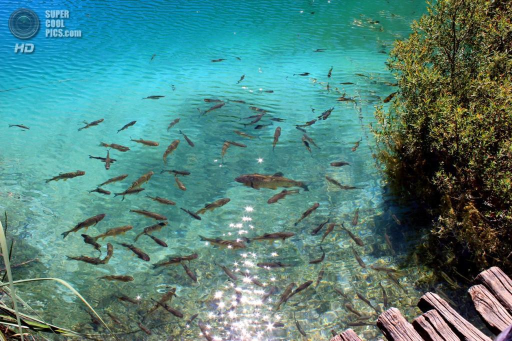 Хорватия. Плитвицкие озёра. (kostbulav)