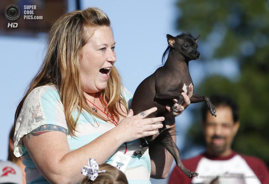 США. Петалума, Калифорния. 21 июня. Китайская хохлатая собака по кличке Ру на юбилейном 25-м конкурсе уродливости World's Ugliest Dog Contest. (EPA/ИТАР-ТАСС/MONICA M. DAVEY)