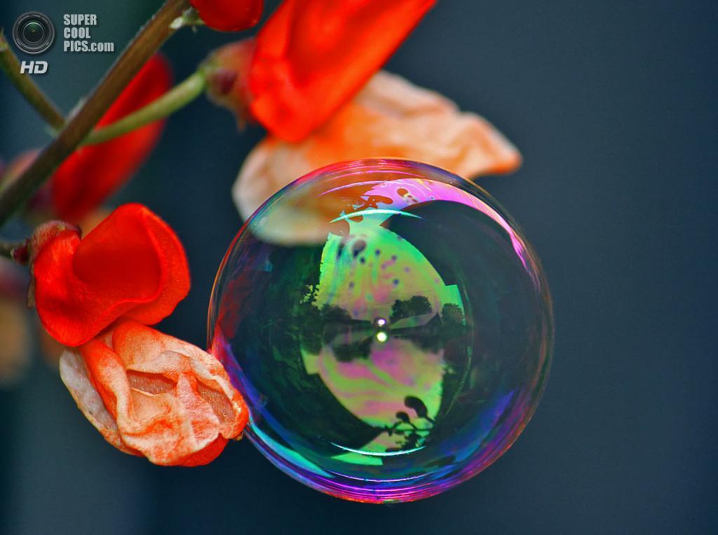 Мыльные пузыри. (daganna)