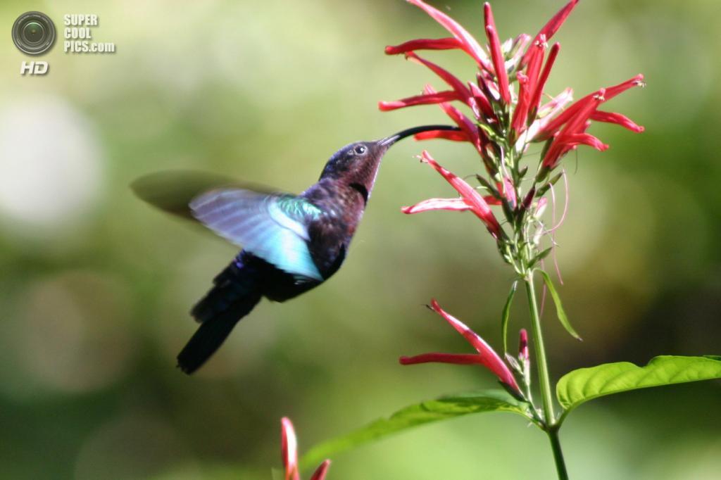 Малютки колибри 18 фото 3 hd видео