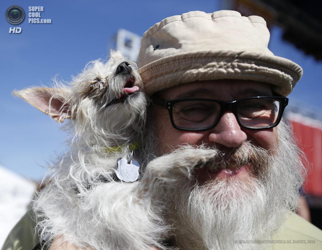 США. Петалума, Калифорния. 21 июня. Китайская хохлатая собака по кличке Элеонора на юбилейном 25-м конкурсе уродливости World's Ugliest Dog Contest. (EPA/ИТАР-ТАСС/MONICA M. DAVEY)