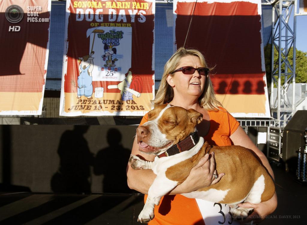 США. Петалума, Калифорния. 21 июня. Помесь бигля, бассета и боксера по кличке Уолли, ставший обладателем Гран-при юбилейного 25-го конкурса уродливости World's Ugliest Dog Contest. (EPA/ИТАР-ТАСС/MONICA M. DAVEY)
