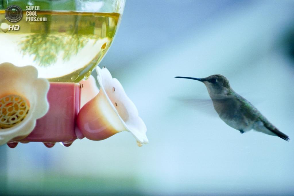 Кормушка для колибри. (GrayImaging)