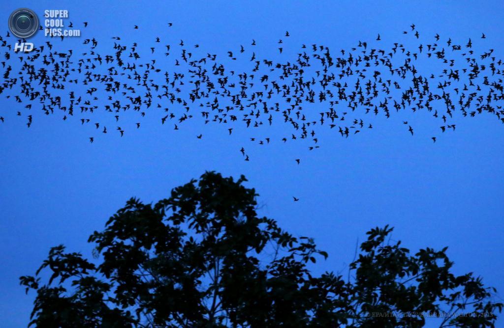 Таиланд. Ратчабури. 5 июня. Миллионы летучих мышей вылетают на охоту с пещеры Tham Khangkhao. (EPA/ИТАР-ТАСС/BARBARA WALTON)