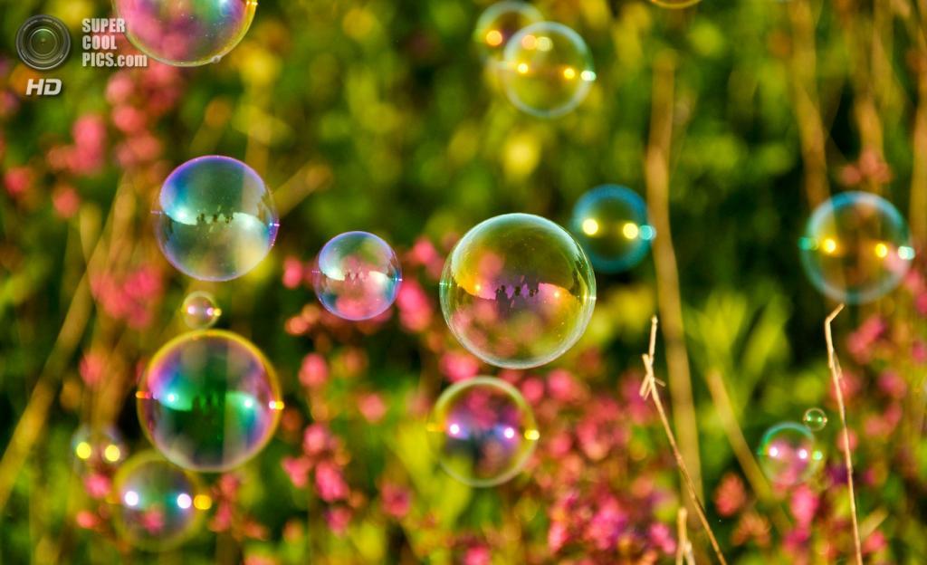 Мыльные пузыри. (ГусениЦа)