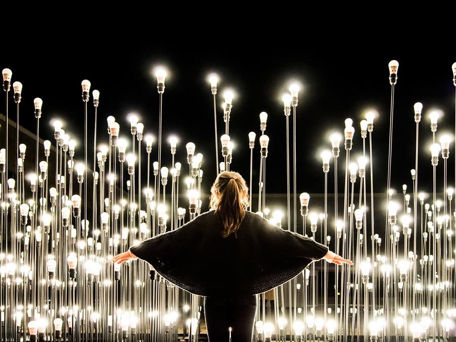 LEDscape: Ламповый лес (13 фото)