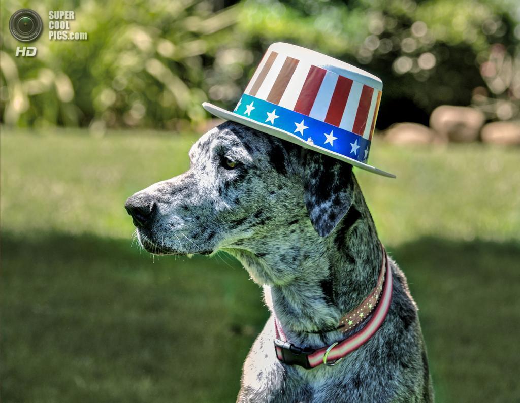 День независимости США. (Barbara)