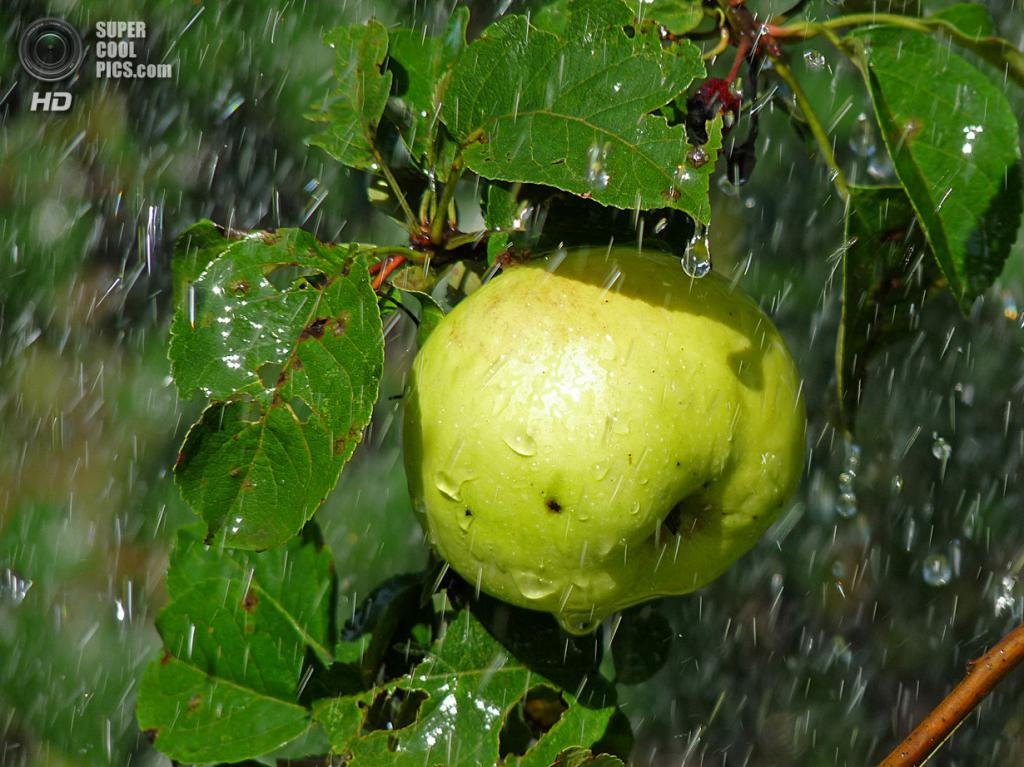 Под дождем. (alechka48)