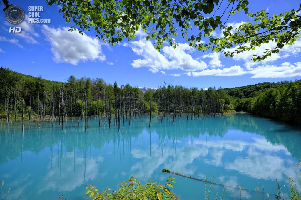 Япония. Хоккайдо. Голубой пруд. (Naomichi Maki)