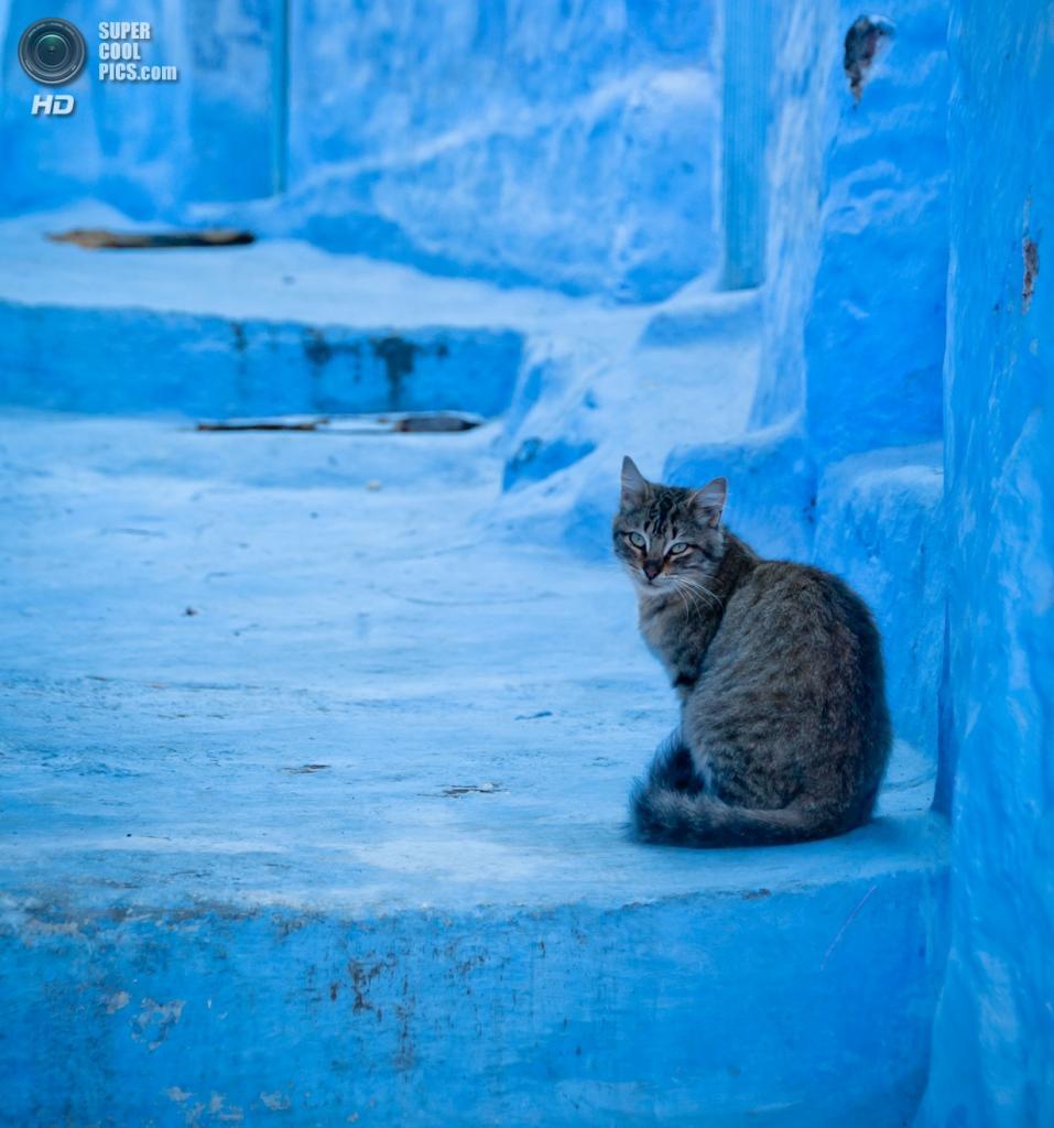 Марокко. Шефшауен. (Zanthia)