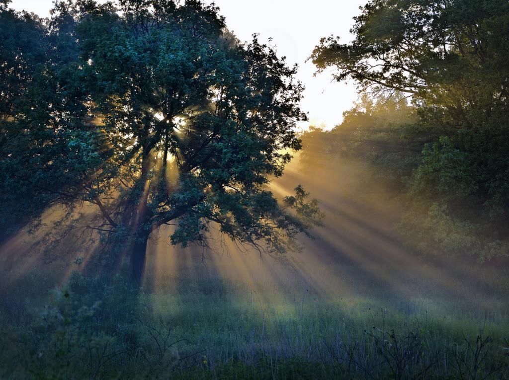 Сумеречные лучи (10 фото)
