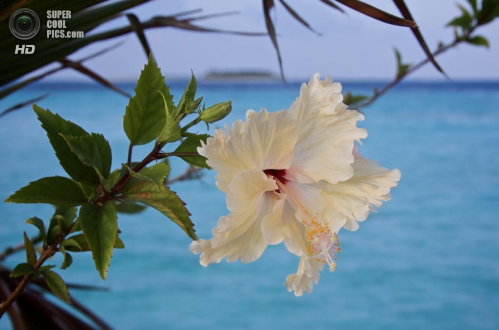 Мальдивы. (Mrs eNil)