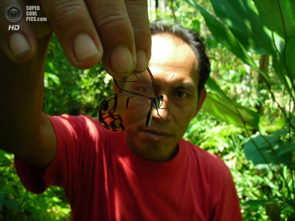 Грета ото, или стеклянная бабочка. (Nicky Campbell)