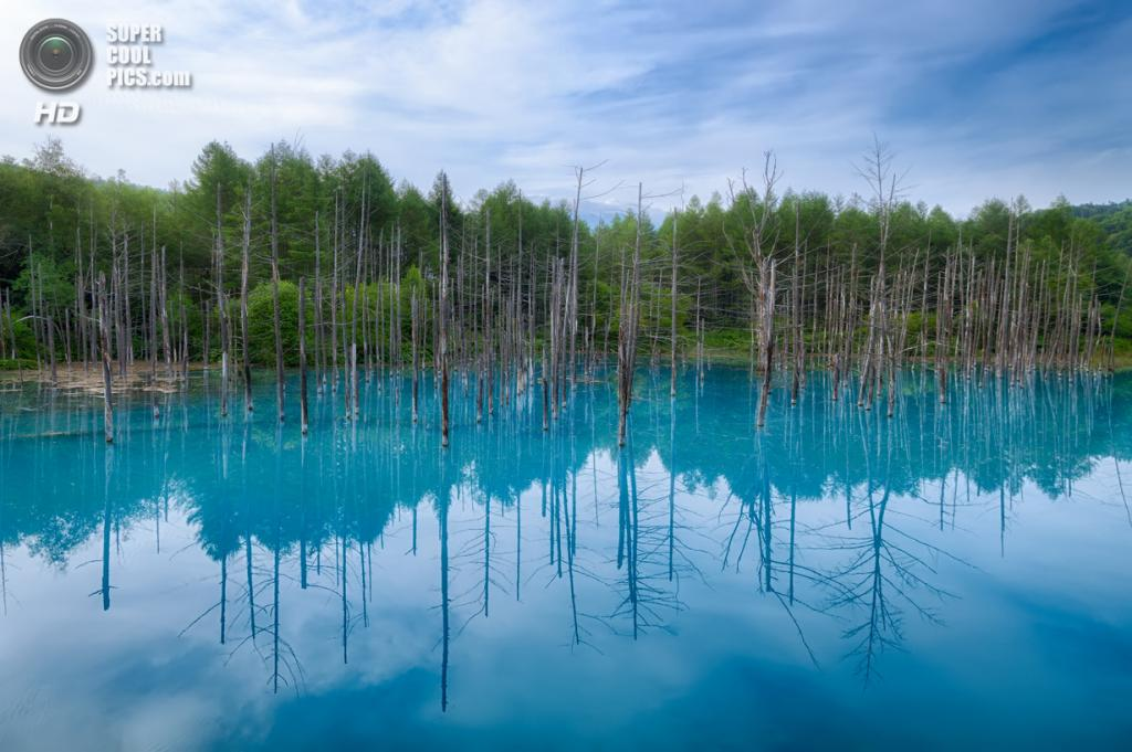 Япония. Хоккайдо. Голубой пруд. (Agustin Rafael Reyes)