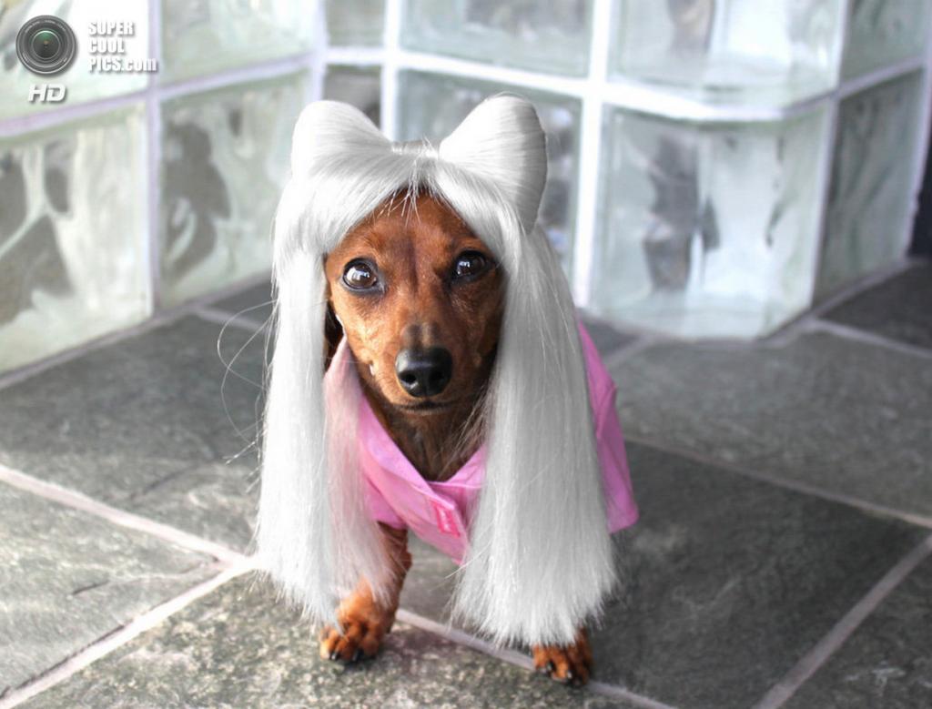 Фото о моде у животных