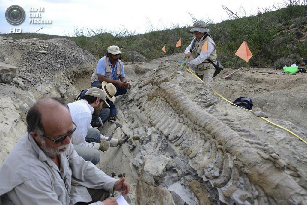 Мексика. Хенераль-Сепеда, Коауила. 22 июля. Палеонтологи Национального института палеонтологии и истории ведут раскопки хвоста динозавра. (AP Photo/INAH-Mauricio Marat)