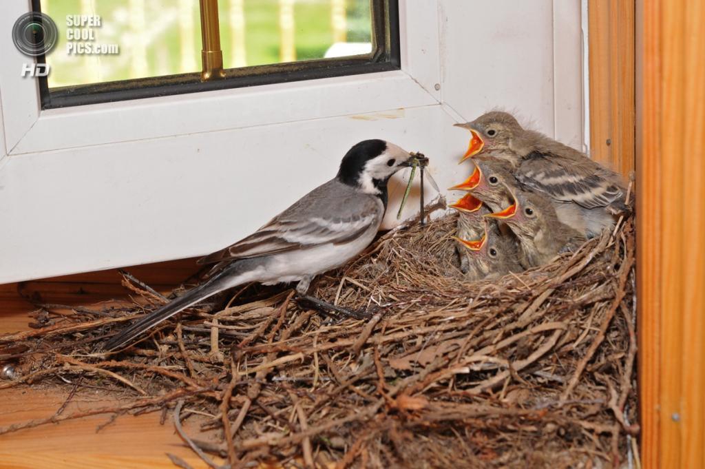 Птичьи квартиры. (Надежда)