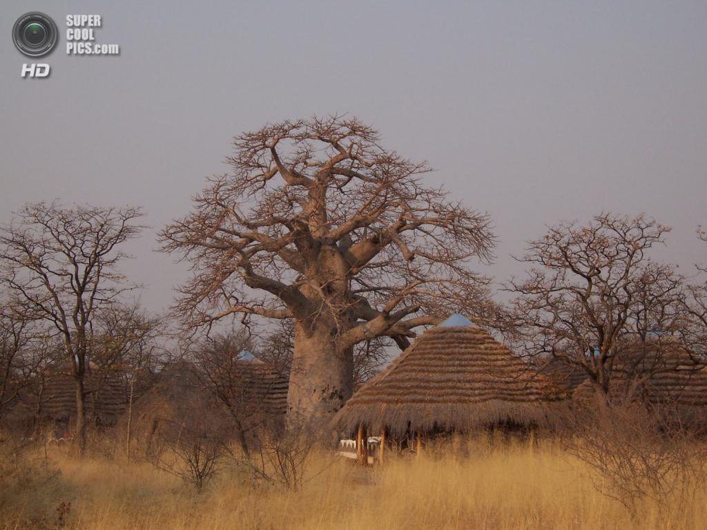 Баобабы. (Zambezi2008)