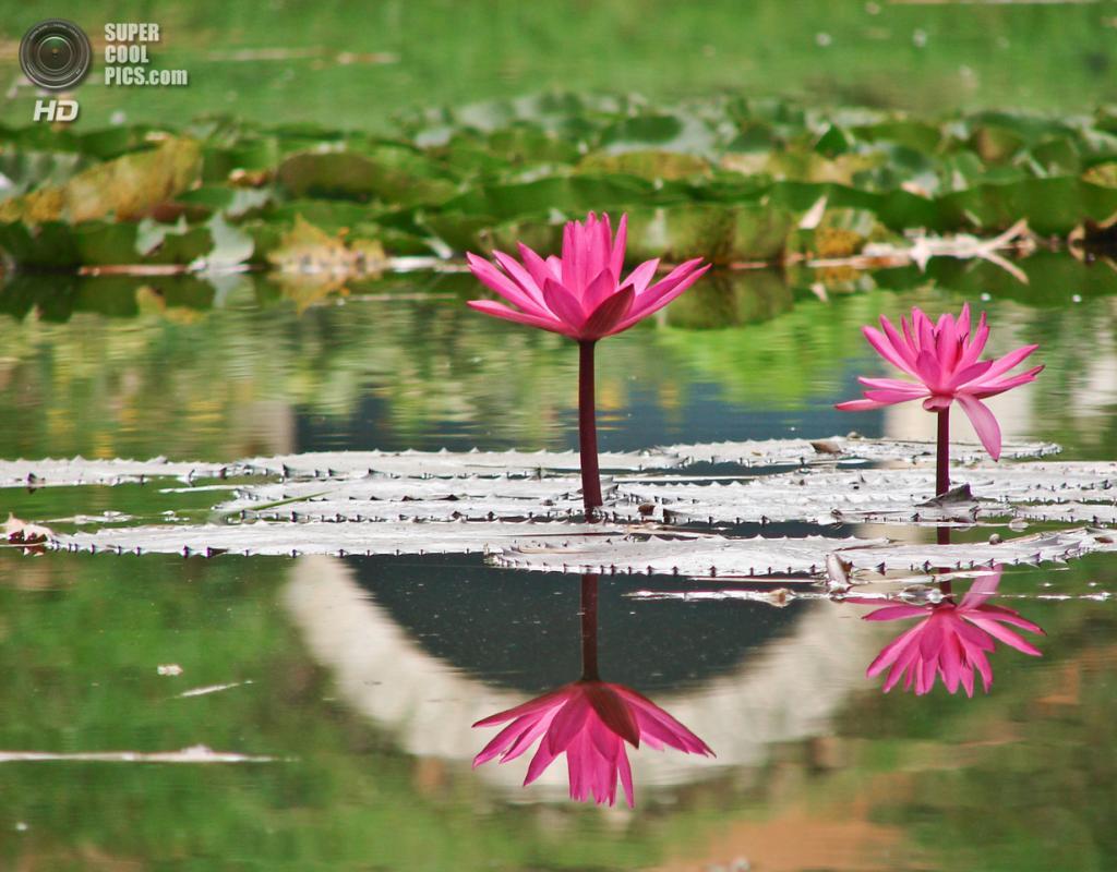 Мир в Зазеркалье. (Poorna Kedar)