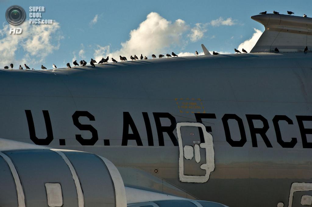 США. Девис-Монтен, Аризона. Голуби облюбовали списанный Boeing YAL-1. (U.S. Air Force/Tech. Sgt. Bennie J. Davis III)
