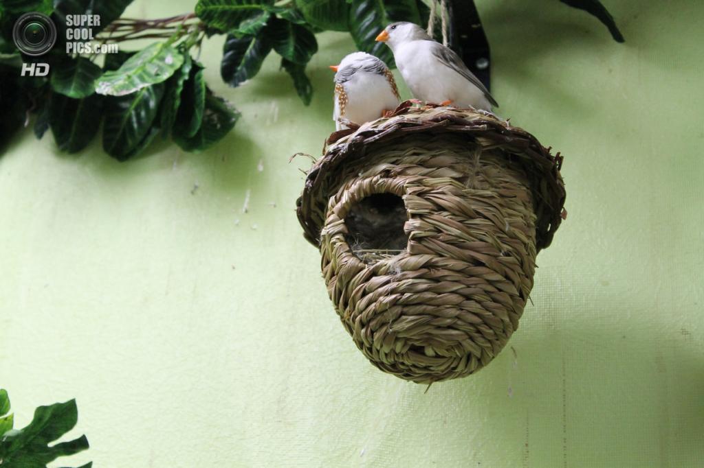 Птичьи квартиры. (MarinA)