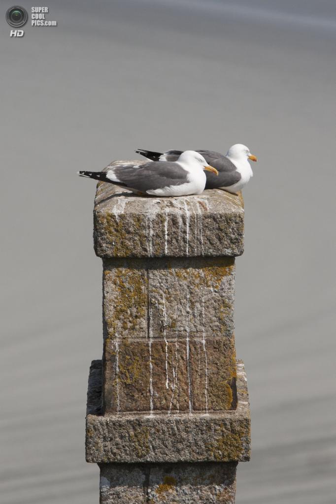 Франция. Манш, Нормандия. Остров-крепость Мон-Сен-Мишель. (Aurélien CHARRON)