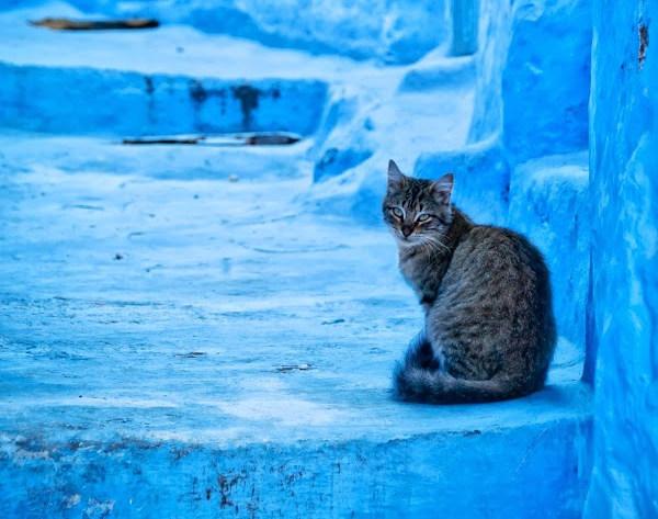 Синий город Шефшауен (30 фото + HD-видео)