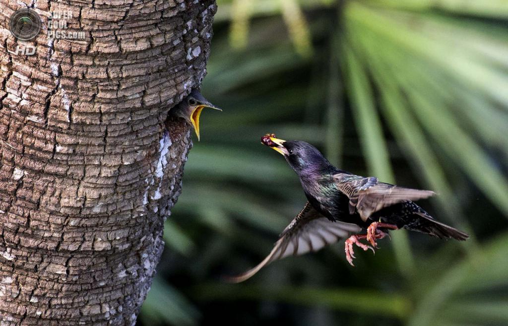 В ожидании завтрака. Гран-при конкурса. (Randy Hough/Focus On Nature/The Palm Beach Post)