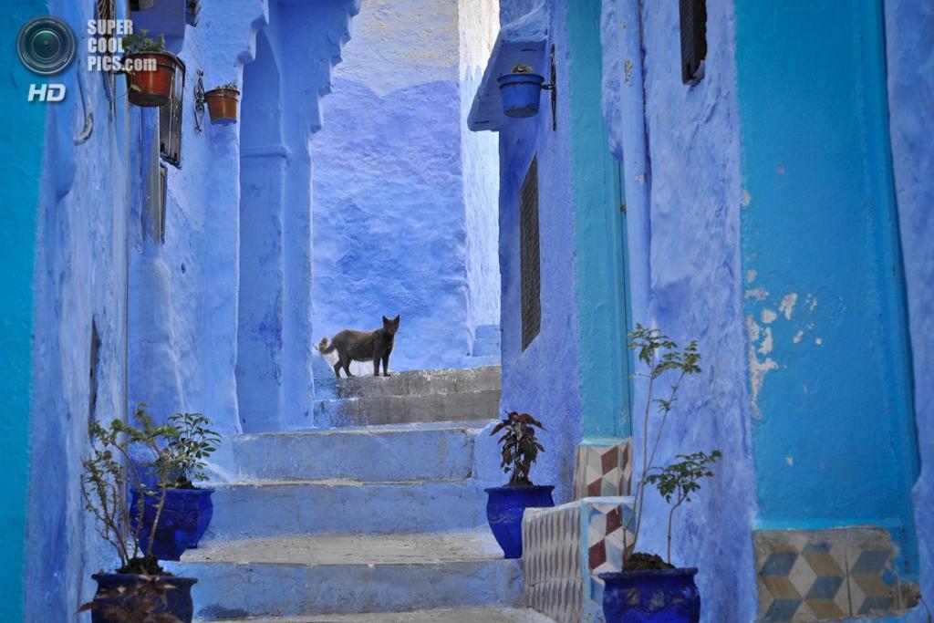 Марокко. Шефшауен. (Mário Tomé)