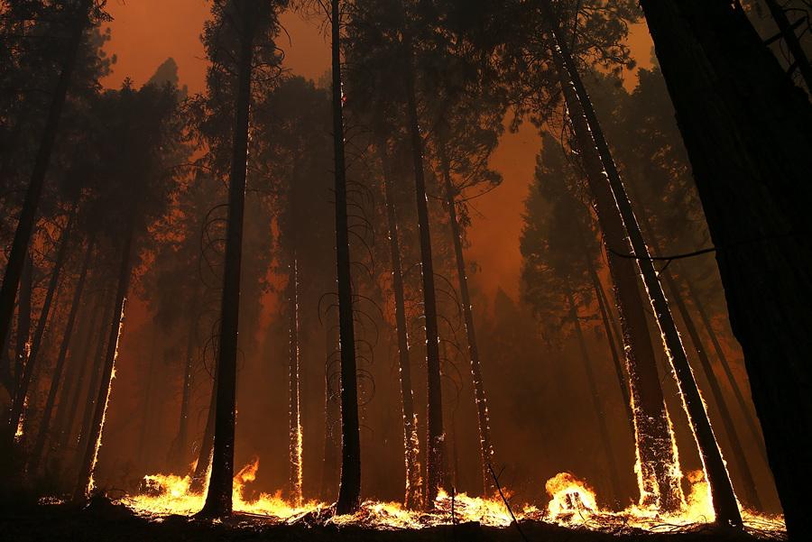 США. Бак-Медоус, Калифорния. 21 августа. Лесной пожар, угрожающий экосистеме Национального парка Йосемити. (Justin Sullivan/Getty Images)