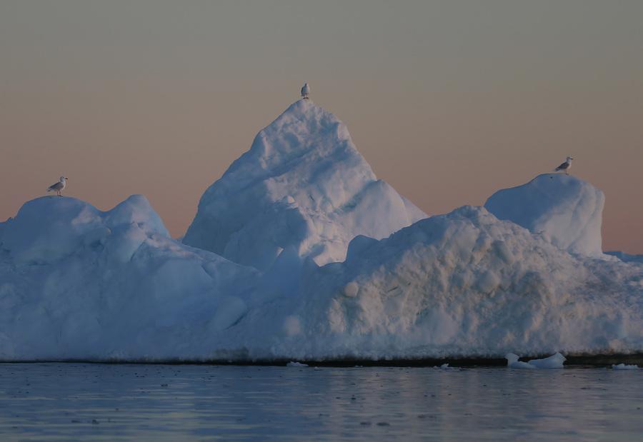 Холодные летние пейзажи Гренландии (25 фото)